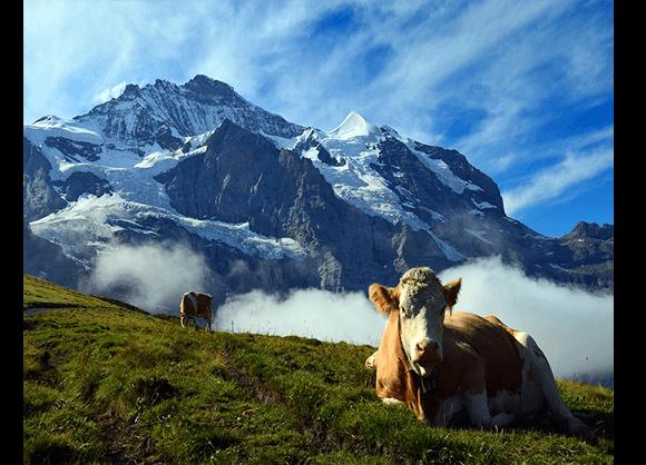 Швейцария освен с величествените Алпи, прекрасните езера и кристалночистият въздух, предлага и разнообразие от кулинарни изкушения, някои от които все още са малко познати по света. Швейцария е дом на богата на вкусове традиционна кухня.